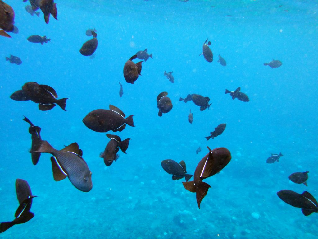 Hawaii sea life | best things to do on Waikiki