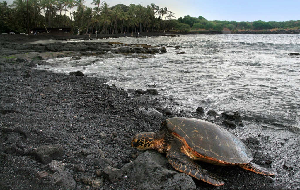 best place to see sea turtles big Island