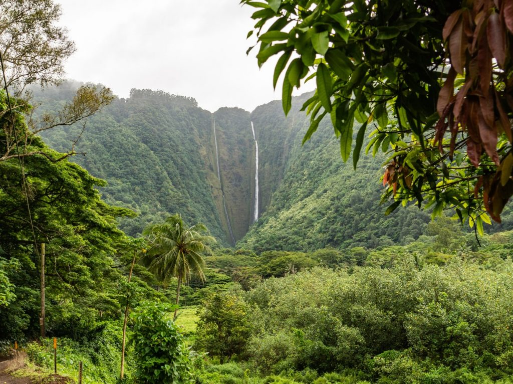 the best tours on the Big Island