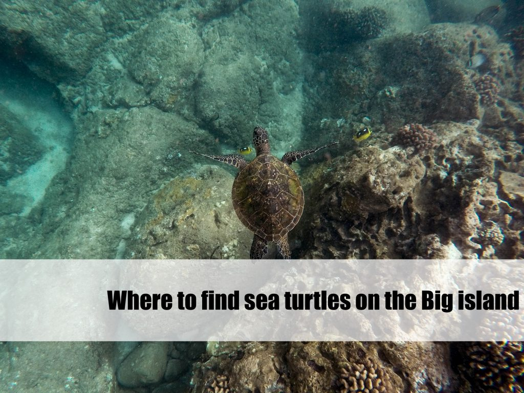 where to find sea turtles on the Big Island