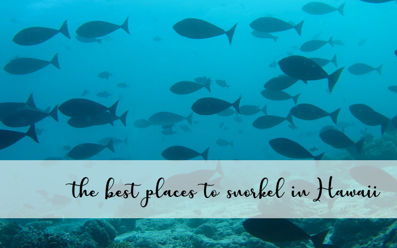 the best snorkeling locations in Hawaii