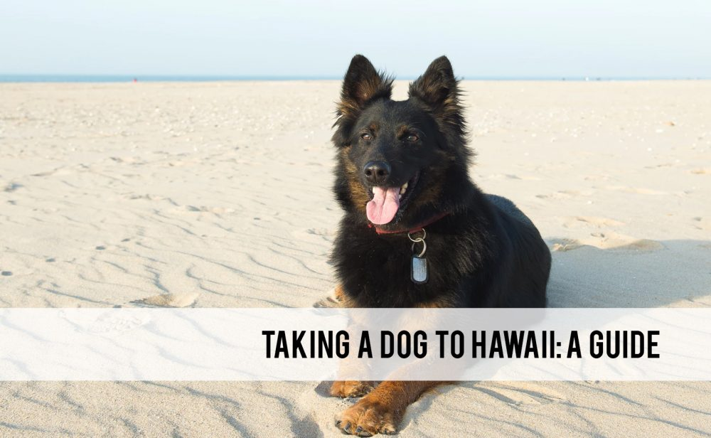 taking a dog to Hawaii