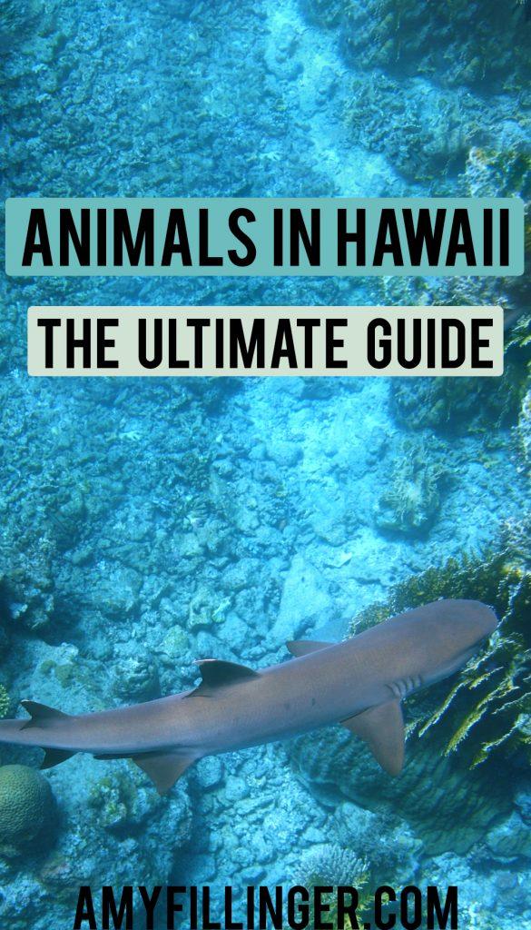 a guide to Hawaiian animals
