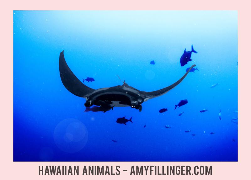 animals of Hawaii