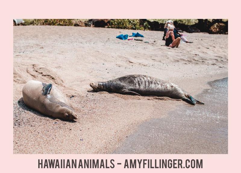 Hawaiian animals   which animals are in Hawaii?
